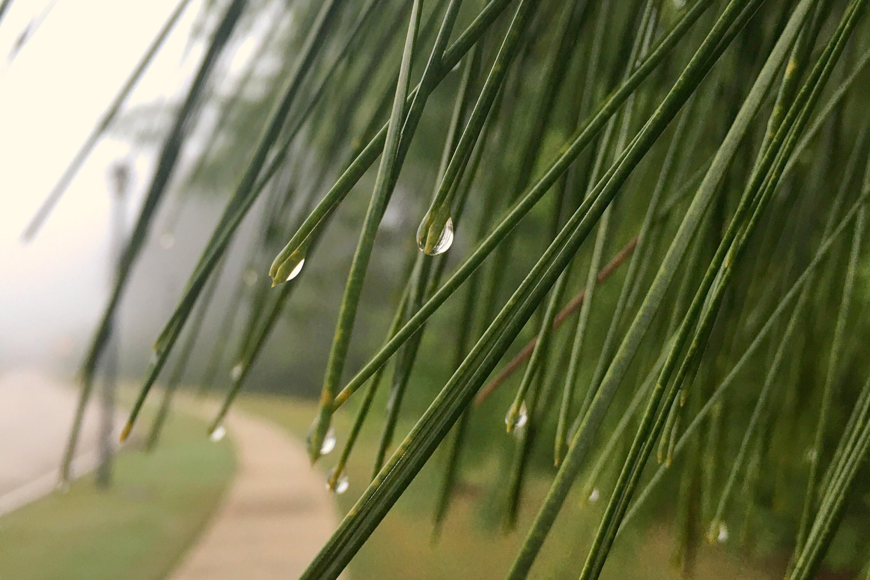 Grace in the Rain
